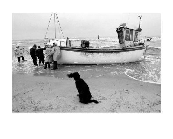 Fisherman's dog / Piotr Malecki